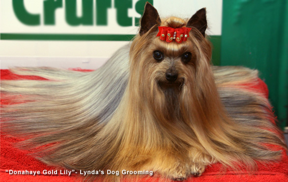 BEST DOG SHAMPOO FOR SILKY SMOOTH COAT YORKSHIRE TERRIER